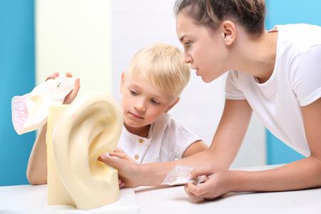 schoolroom: Help scientific model of the human ear. Stock Photo