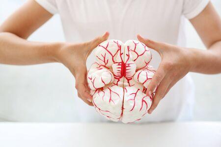 sistema nervioso central: Ejercer su hijo brain.A sostiene en sus manos un modelo del cerebro humano. Foto de archivo