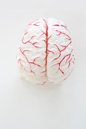 the psyche: Modelo de cerebro humano sobre un fondo blanco