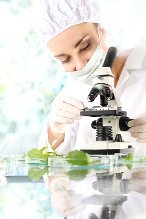Laboratory tests. Biotechnologist examine samples of plant under microscope Stock Photo