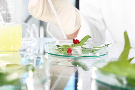 analytical chemistry: Biotechnology. Biotechnologist examine the plant samples in the laboratory