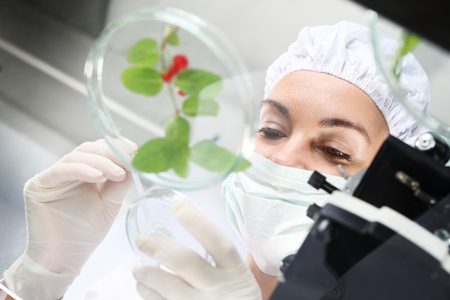 Biotechnologist examine samples of plant under microscope