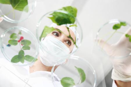 in vitro: plantas Laboratory injerto.
