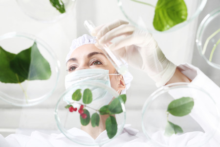 analytical chemistry: Genetically modified plants.