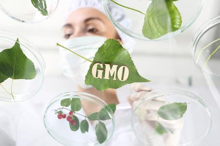 experimento: Gmo. Plantas genéticamente modificadas.
