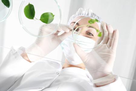 In vitro における植物。Biotechnologist 実験室で植物のサンプルを調べる