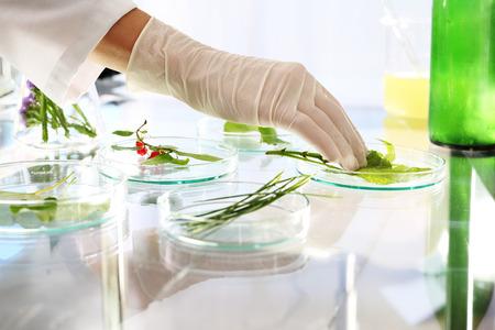 experimento: Laboratorio. Biotecnólogo examinar las muestras de plantas en el laboratorio
