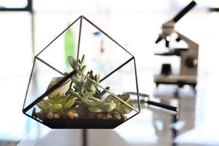 analytical chemistry: Laboratory biotechnology, microscope. Workshop laboratory microscope stands on a glass countertop Stock Photo