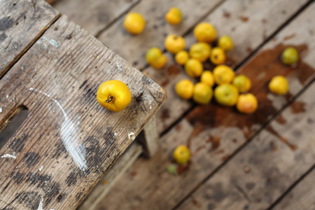 pantry: Fruit quince. Mature fruit quince in the home pantry Stock Photo
