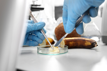 Microbiological examination of food in the laboratory. The laboratory worker analyzes the composition of the collected sample.