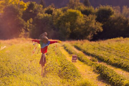 Scarecrow with barrier tape standing in strawberry field in dreamy summer backlit atmosphere