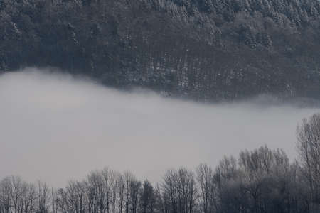 Two horizontal lines of trees in winter with thick fog in between