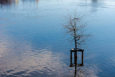 Solitary tree standing in high water flooded area with snow melting in early spring
