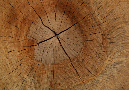 cut off saw: Detail shot of a sawed-off beech trunk with a split surface
