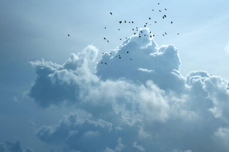 thundercloud: A flock of crows flies high in the sky in front of a thundercloud. Stock Photo