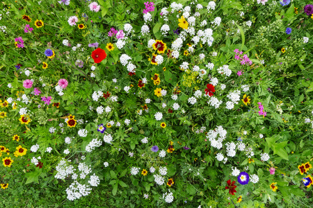 Close-up of a colorful flower meadow in Germany, Europe, with a view from above Foto de archivo