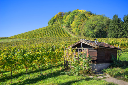 wooden hut: Small brown, wooden hut in a vineyard on a sunny autumn day