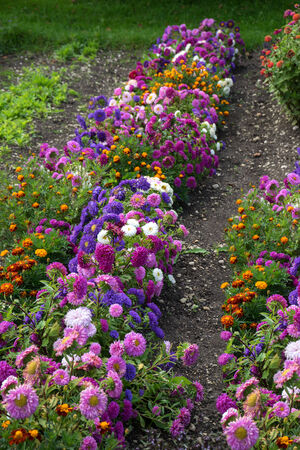 late summer: Colorful flowers in a typical cottage garden in late summer, taken in September in Germany, Europa Stock Photo
