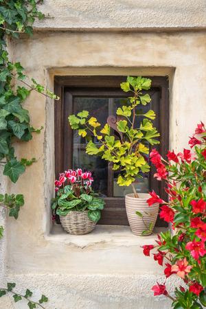 dipladenia: Fioriti vecchia finestra in una vecchia facciata con edera, ciclamino, ginkgo e Dipladenia fioritura rosso