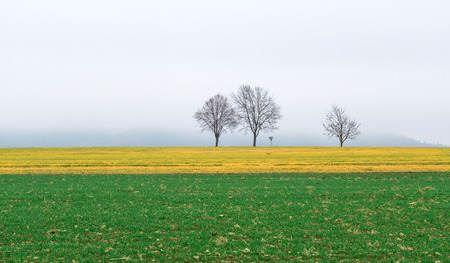 A green and a yellow field in front of three bare trees and a traffic sign on a foggy November day in Germany. photo