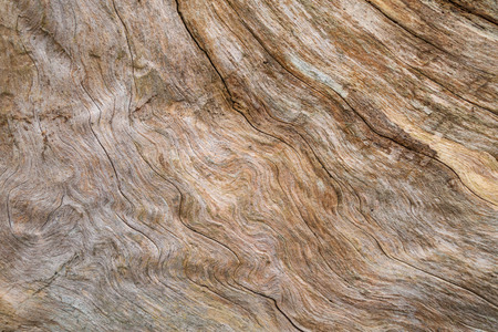 close p: Abstract, wavy pattern in the wood of a tree stump in gray and brown