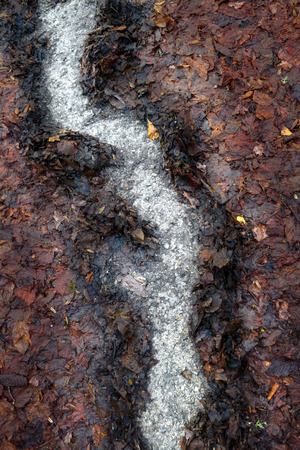 sodden: Abstract pattern in brown, mouldered autumn leaves - FORMED by water During heavy rain. Stock Photo