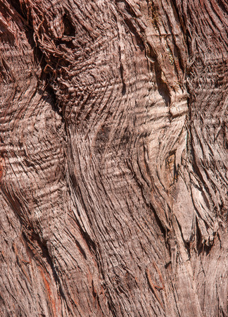 fibrous: Detail shot of the abstract pattern of a brown, fibrous palm trunk