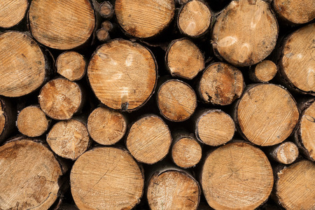 piled: Close up of tree trunks with different diameters which have been piled in a stack.