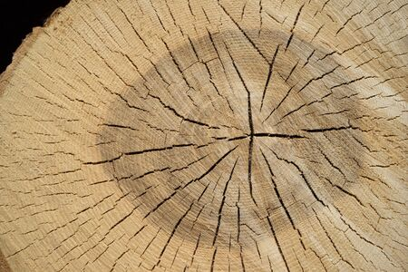 sawed: Detail of the cracked cut surface of a newly sawed tree trunk