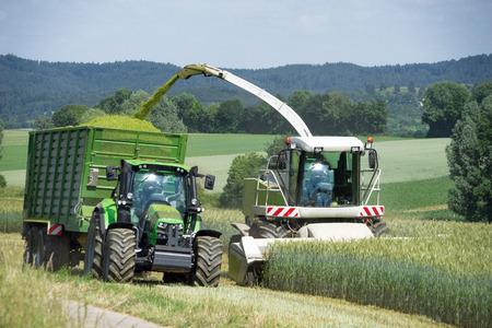 Hakselaar met gehakte material handling tijdens het oogsten van graan als gehele plant silage voor de productie van biogas Stockfoto