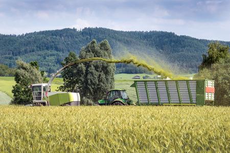 Oogsten van de hele oogst kuilvoer