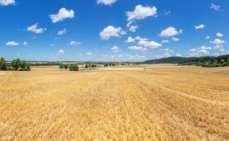 stubble field: Golden yellow stubble field in rural landscape