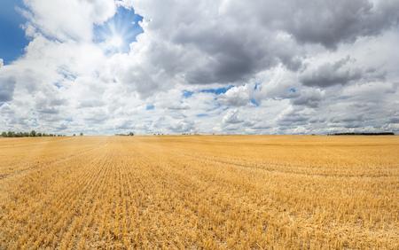 stubble field: Large golden yellow stubble field