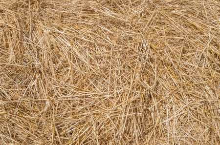 jumbled: Dry, loose straw in the sunlight in close-up Stock Photo