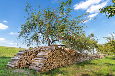 woodpile: Big woodpile under an apple tree in an orchard Stock Photo