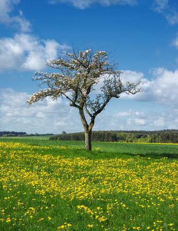 tree vertical: Blooming apple tree in a flower meadow