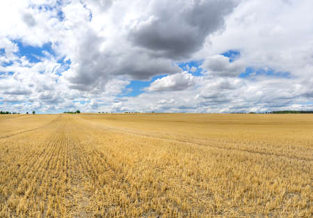 stubble field: Large stubble field with low clouds Stock Photo