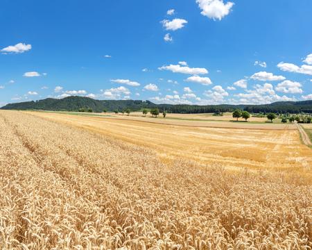 stubble field: Wheat field and stubble field in rural landscape