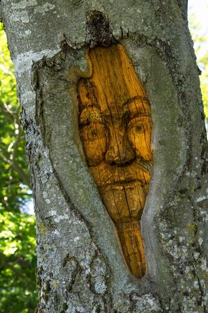 Carved face in a tree trunk