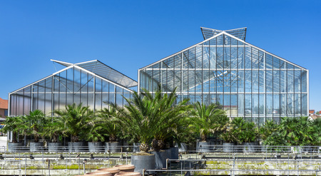 implanted: Palm trees against greenhouses