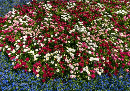 herbaceous border: Flowerbed
