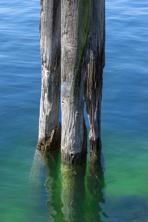 wooden post: Old wooden post in a lake