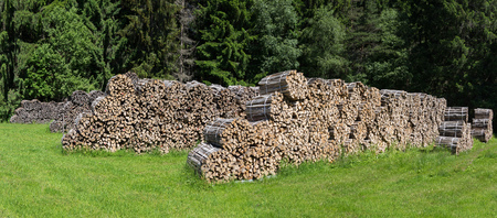 bundled: Bundled firewood on a glade