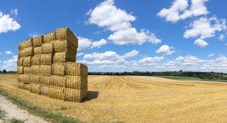 stubble field: Stacked straw bales on a stubble field