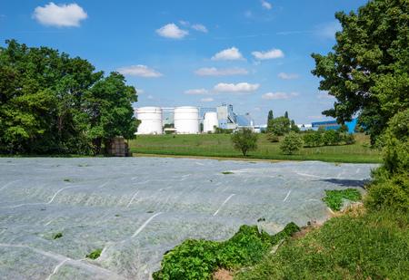 Field covered with nonwoven Фото со стока