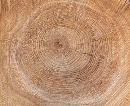 Texture of the annual rings of a tree