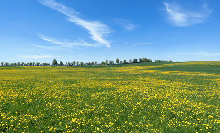 Landscape in spring with large flower meadow