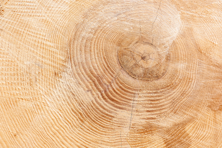Annual rings of a thick tree trunk with slightly cracked wood texture