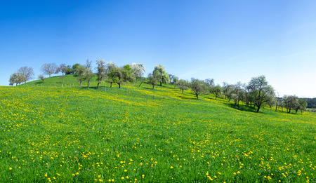 Flower meadow with dandelion at a hill Stock Photo