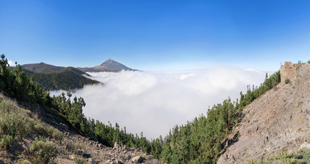 Forest above the clouds in the national park Tenerife with Teide Stock Photo